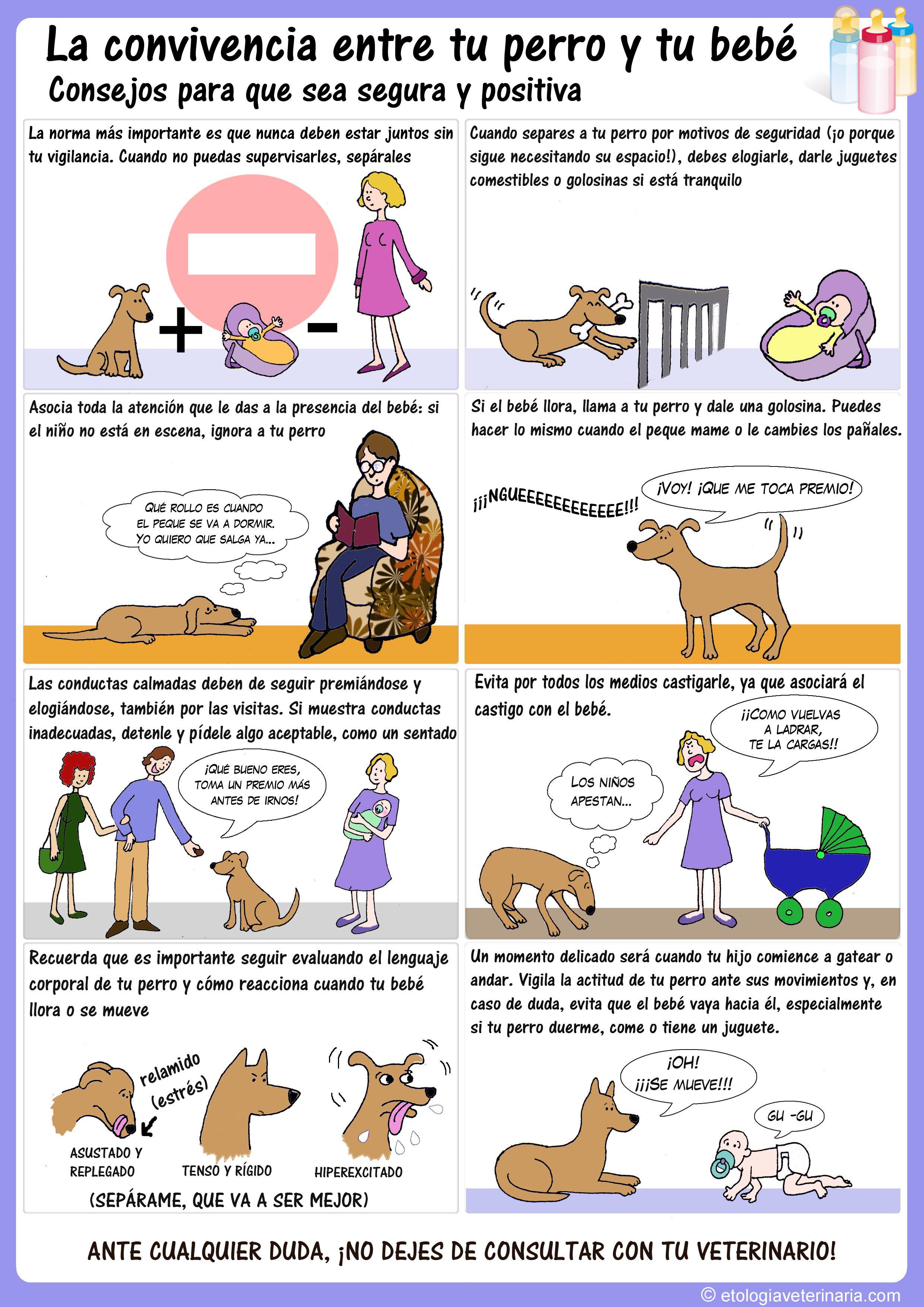 Alcorcon centauro veterinarios p gina 7 - Cuando se puede banar a un perro ...