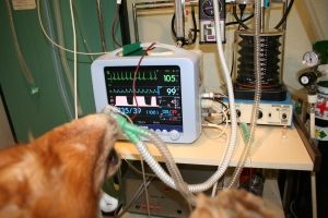 Anestesia inhalatoria monitorizada