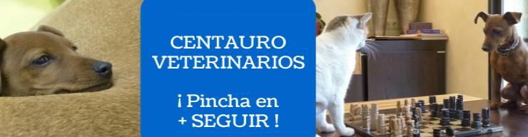 centauro veterinarios