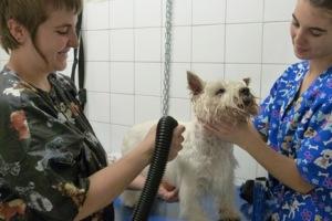 Secando a una preciosidad de perro.